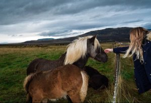 Girl with horse in Iceland